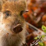 AGRIFAMA MACCHINE AGRICOLE: Fauna selvatica